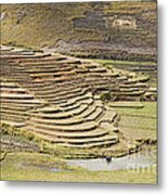 Terraces And Paddy Fields Metal Print