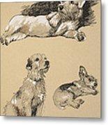 Terriers, 1930, Illustrations Metal Print