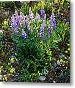Teton Widflowers  Metal Print