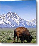 Tetons Buffalo Range Metal Print