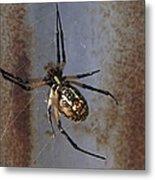 Texas Barn Spider In Web 2 Metal Print