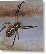 Texas Barn Spider In Web 3 Metal Print