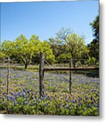 Texas Bluebonnet Lupine Pature Metal Print