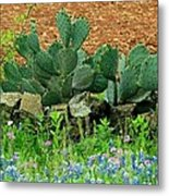 Texas Bluebonnets And Cactus Metal Print