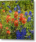 Texas Bluebonnets And Red Indian Paintbrush Metal Print