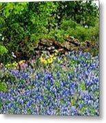 Texas Bluebonnets And Stone Wall Metal Print