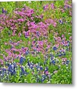 Texas Bluebonnets And Wildflowers Metal Print