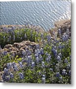 Texas Bluebonnets At Lake Travis Metal Print