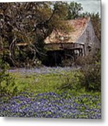 Texas Bluebonnets With Old Abandoned Shack Metal Print