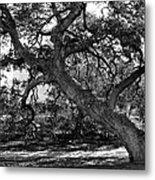 Texas Capitol Tree Metal Print