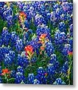 Texas Colors Metal Print
