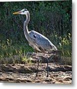 Texas Coastal Birds Metal Print