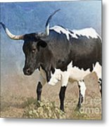 Texas Longhorn #7 Metal Print by Betty LaRue