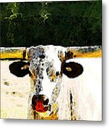 Texas Longhorn - Bull Cow Metal Print by Sharon Cummings