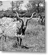 Texas Longhorns A Texas Icon Metal Print by Christine Till