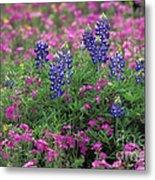 Texas Wildflowers 3 - Fs000930 Metal Print