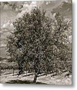 Texas Winery Tree And Vineyard Metal Print