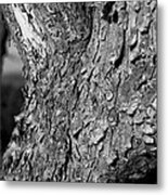 Texture In The Trees Metal Print