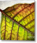 Textured Leaf Abstract Metal Print