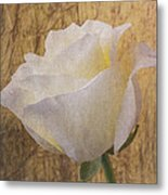 Textured Rose Metal Print