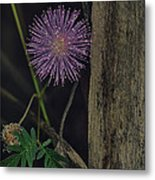 Thailand  Purple Wild Flowers Metal Print by David Longstreath