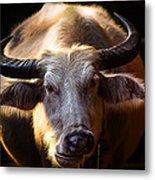 Thailand White Buffalo Metal Print by Arthit Somsakul