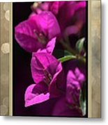 Thank You - Bougainvillea Flowers Metal Print