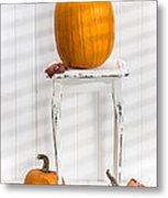 Thanksgiving Pumpkin Display Metal Print