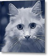 That Cat Metal Print