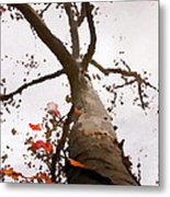 That Tree Metal Print