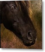 that Wild Look Metal Print
