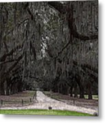 The 99 Oak Trees Metal Print