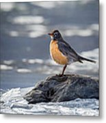 The American Robin Square Metal Print