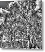 The Ancient Forest Metal Print
