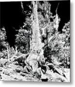 The Ancients - 1010 Metal Print