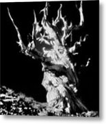 The Ancients - 1011 Metal Print
