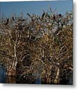 The Anhinga Trees Metal Print