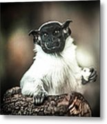 The Anxious Ape Metal Print