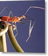 Garden Assassin Bug Metal Print