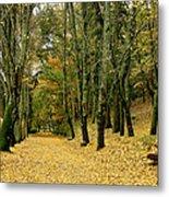 The Autumn Path Metal Print