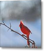 The Awesome Cardinal Metal Print