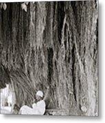 The Banyan Tree Metal Print