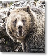 The Bathroom Bear Metal Print