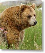 The Bear Dry Brushed Metal Print