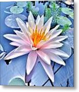 The Beautiful Lily Pond Metal Print