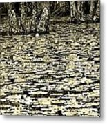 The Beauty Is In The Contrasts  Metal Print