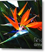 The Beauty Of A Bird Of Paradise Metal Print