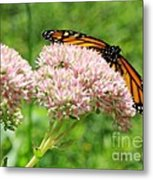 The Beauty Of A Monarch Metal Print