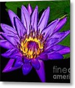 The Beauty Of A Water Liliy Metal Print