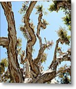 The Beauty Of Many Layers Metal Print